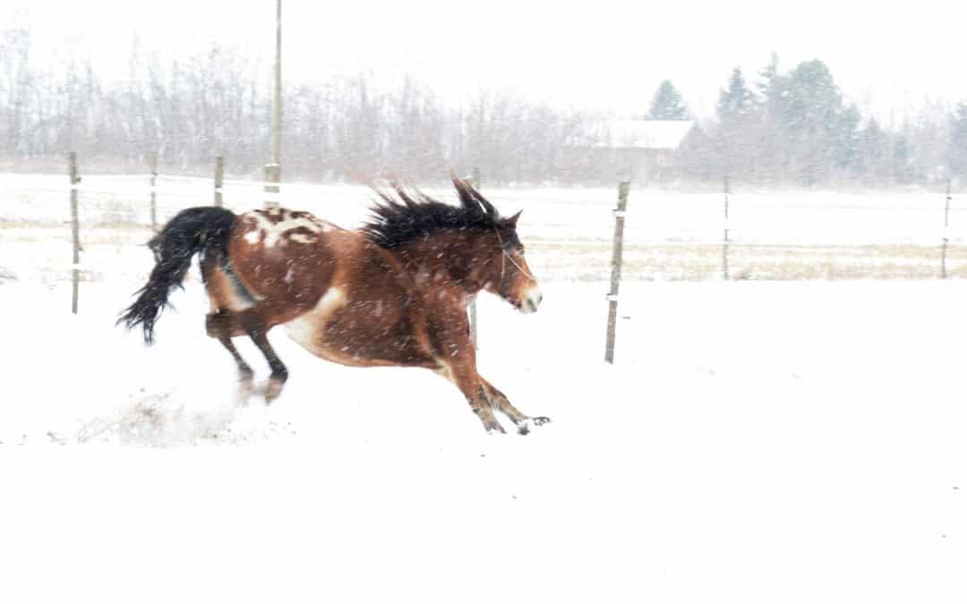 Miért rohan a lovam? -2. Lelki okok