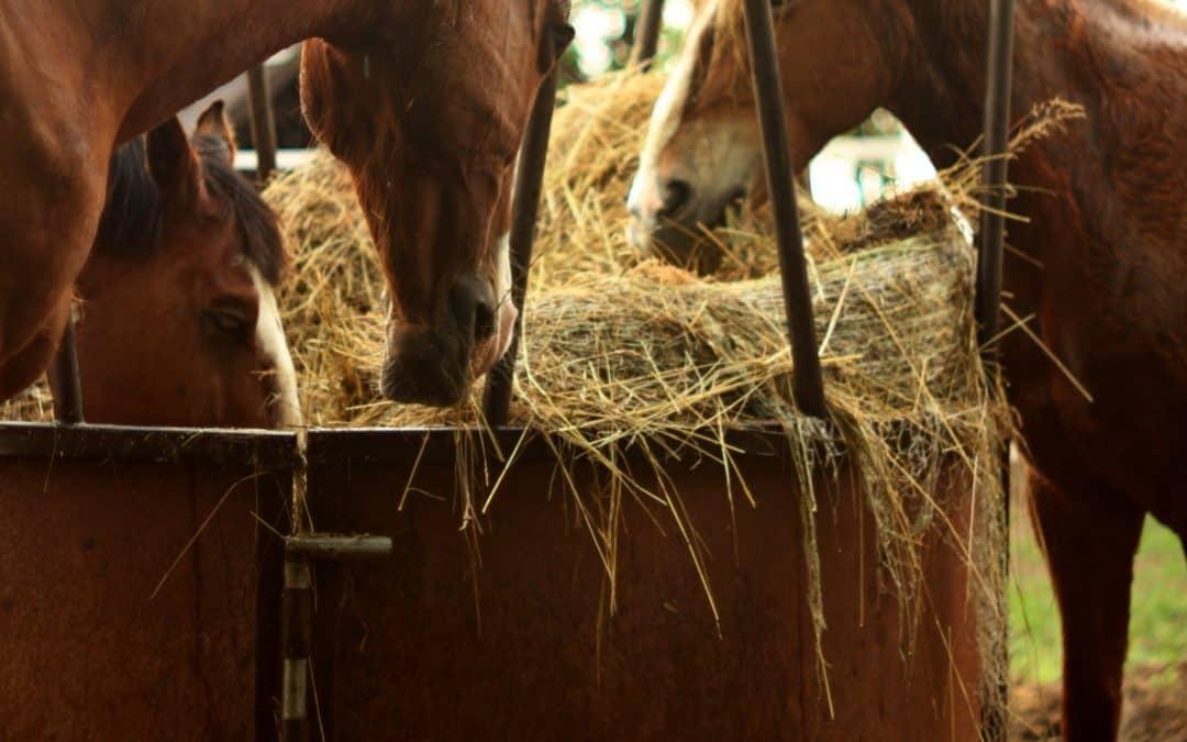 Miért tartom a lovaimat félrideg tartásban?