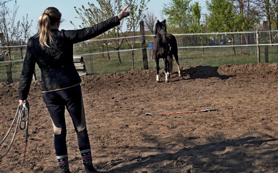 A lovasbalesetek három legfőbb oka